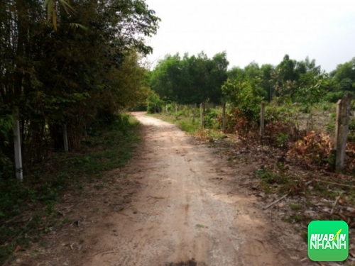 Tư vấn luật chuyển đổi đất nông nghiệp thành đất thổ cư
