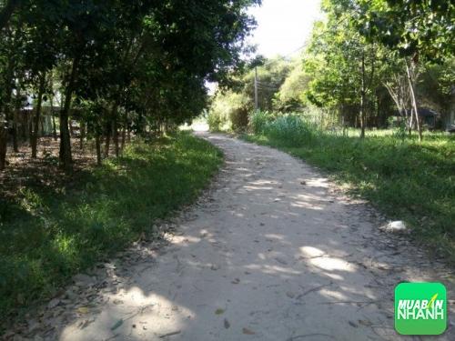 Tư vấn luật chuyển đổi đất nông nghiệp thành đất thổ cư, 382, Mãnh Nhi, NhaDatVip.Com, 10/05/2018 09:44:11